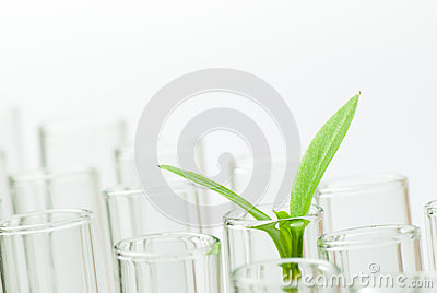 Sprouts on test tube