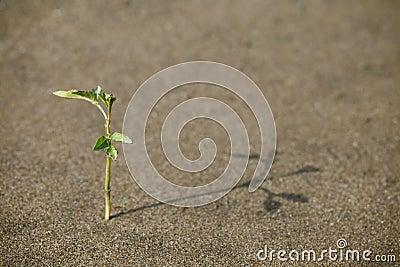 Sprössling im Sand