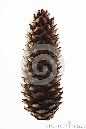 Spruce cone
