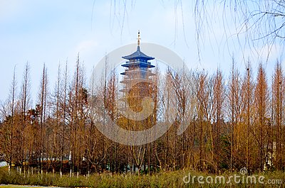 Spruce forest, and pagodas