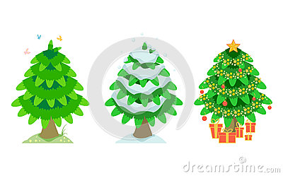 Spruce in the summer and winter and christmas