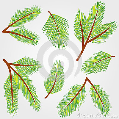 Spruce twigs illustration