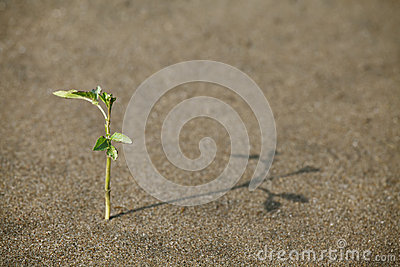 Spruit in het zand