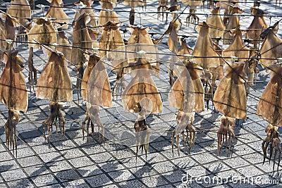 Squadra del calamaro