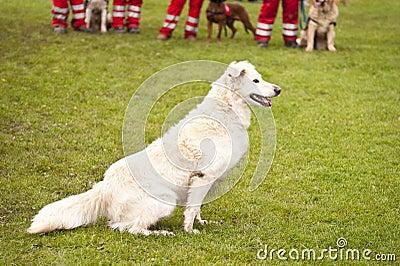 Squadrone del cane di salvataggio