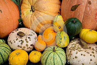 Squash and pumpkin