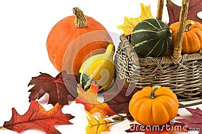 Squash and pumpkins