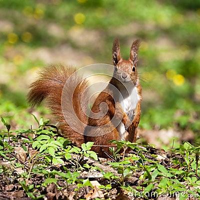 Free Squirrel Stock Images - 13960544