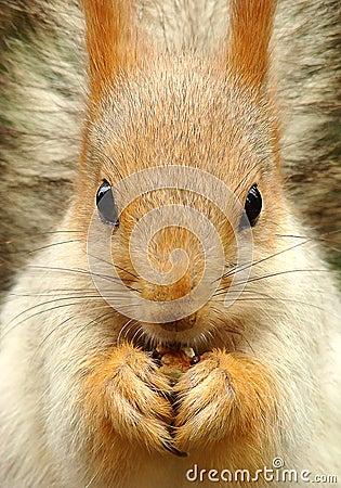 Free Squirrel Stock Image - 47877411