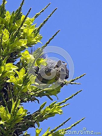 Squirrel buzz