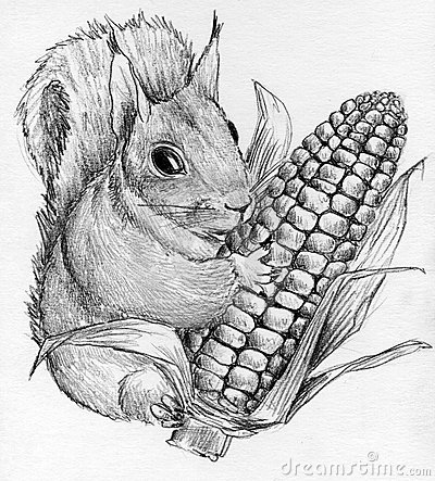 Squirrel with corncob