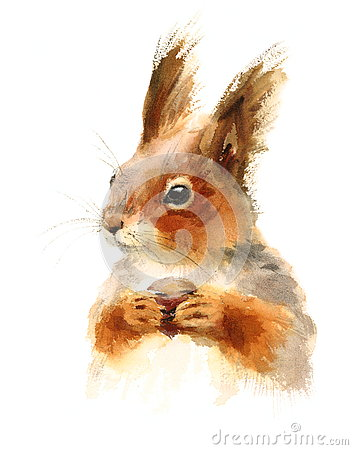 Free Squirrel Eating Nuts Wild Animal Winter Illustration Hand Painted Royalty Free Stock Image - 80711486