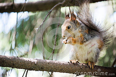 Squirrel eating on tree