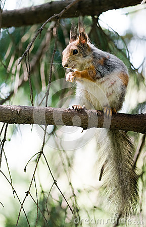 Squirrel eating