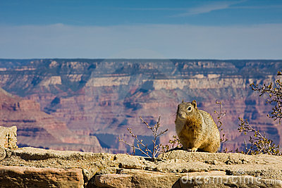 Squirrel on the Edge
