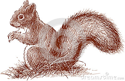 Squirrel with the fluffy tail