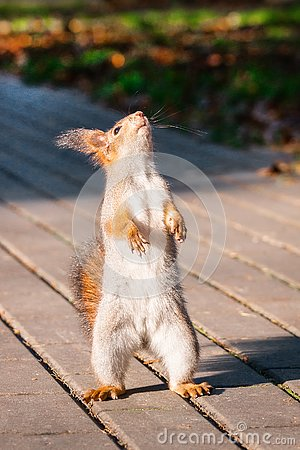 Free Squirrel In The Autumn Park Royalty Free Stock Photos - 131000508
