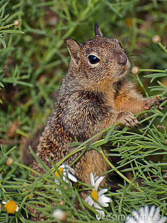 Free Squirrel In The Flowers Royalty Free Stock Photography - 18248837