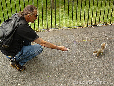 Squirrel in London Editorial Image