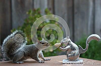 Squirrel meets squirrel