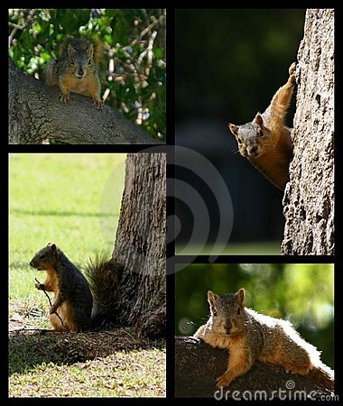 Squirrel montage