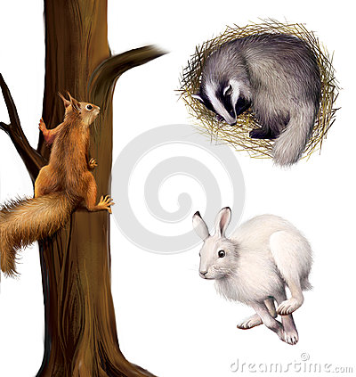 Free Squirrel On A Tree, Sleeping Badger, Running Hare. Stock Photos - 29742283
