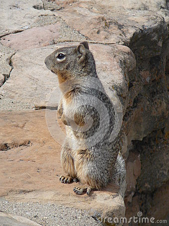 Squirrel on rocks