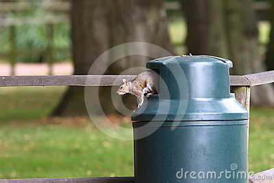 Squirrel in rubbish bin