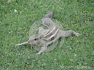 Squirrel take a rest