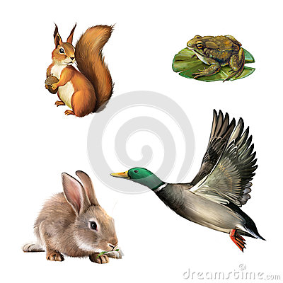 Free Squirrel, Toad, Rabbit And Drake Royalty Free Stock Photography - 29738507