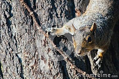Squirrel On Tree Free Public Domain Cc0 Image