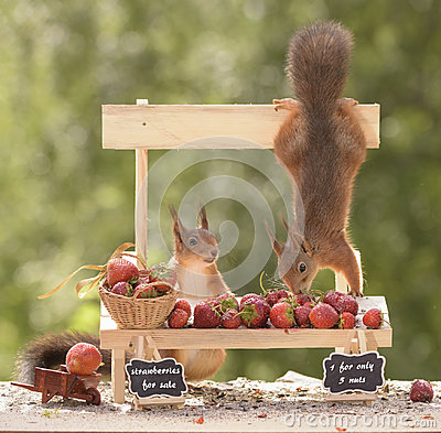 Free Squirrels With A Strawberry Market Stall Stock Photography - 97270282