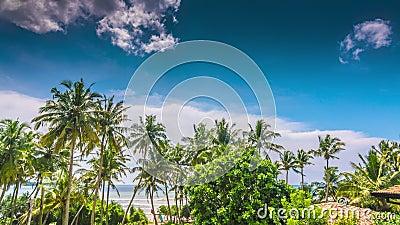 Sri Lanka - strand med palmer arkivfilmer