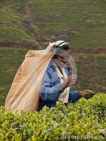 Sri lanka woman Editorial Photo