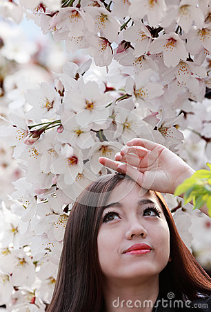 Säsong för körsbärsröd blomning