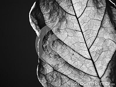 Stäng upp den torkade leafen