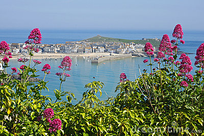 St. Ives wild red Valerian, Cornwall UK.
