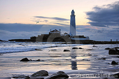 St Mary s Lighthouse and Gull