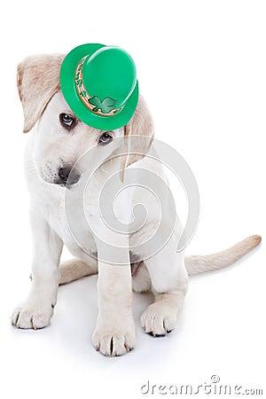 Free St Patrick Day Stock Photos - 37252783