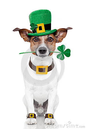 Free St. Patrick S Day Dog Royalty Free Stock Photography - 26119207