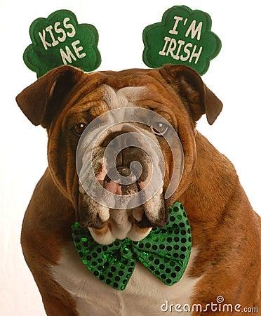 Free St. Patrick S Day Dog Stock Photos - 8108663