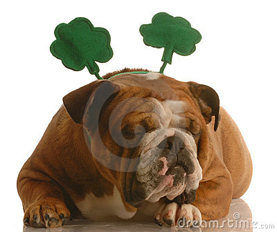 St. Patrick s Day dog