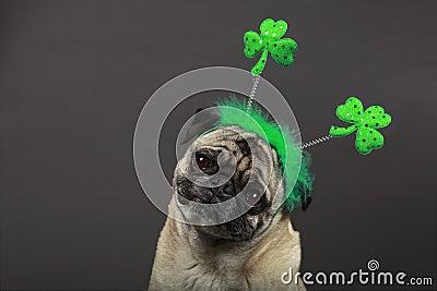 St. Patrick s Day Pug