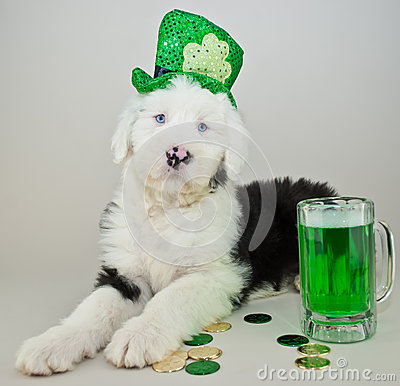 Free St Patrick S Day Puppy Royalty Free Stock Photo - 50474715