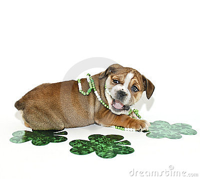 St Patricks Day Bulldog Puppy.