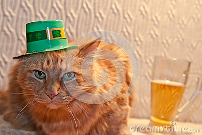 St. Patricks Day Cat