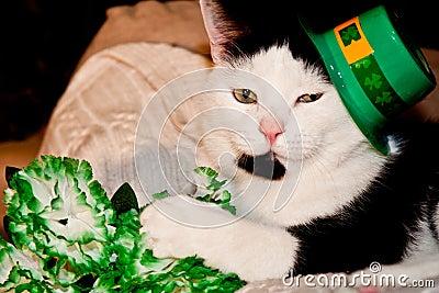 St. Patricks Day Cat