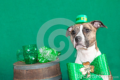 St. Patricks Day Dog