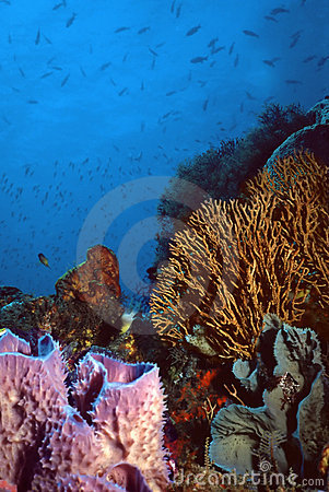 Free St. Vincent Coral Reef Royalty Free Stock Photography - 123397