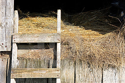 Stable hay
